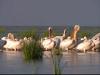 pasari Delta Dunarii