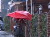 ploaie, vant, umbrela