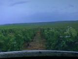 Cum poti ajunge pe podgoriile de vin din Franta fara sa cumperi un bilet de avion. Tehnologia care revolutioneaza calatoritul