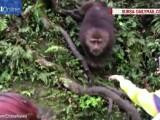 Maimuta care fura telefon
