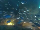 Imagini uimitoare filmate sub apa, printre pesti, in format 360 de grade. Cat costa camera BoxFish 360 si ce stie sa faca
