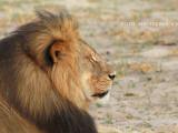 leul Cecil