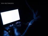 """Unul dintre cei mai periculosi hackeri din lume este roman. """"Grupul de studiu pentru criminalii cibernetici"""""""