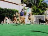 petrecere de caini