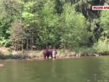 ursoaica