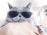 povestea pisicii