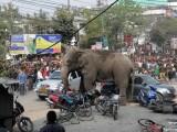elefant India
