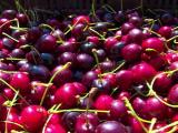 Grindina a scazut la jumatate productia de cirese de la Ciresoaia. La ce pret sunt nevoiti sa le vanda acum cultivatorii
