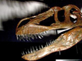 Remains of Europes largest predatory dinosaur discovered in Portugal
