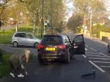 Copilul accidentat dupa ce a trecut ilegal strada