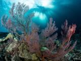 fotograf oceane