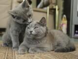 pisici, Andreea Raicu