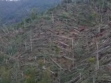 copaci doborati de furtuna
