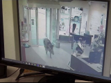 Porci mistreți în bancă