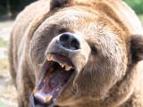 urs furios