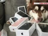 """Un chinez i-a cumparat """"celui mai bun prieten"""" al sau 8 iPhone-uri. Singura problema este ca acesta nu poate vorbi"""