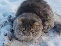 pisica inghetata