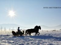 sanie trasa de cai pe zapada