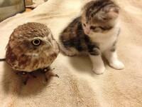 Cucuvea, pisica - FB