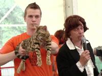 pisica scumpa