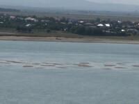 insule de nisip pe Dunare din cauza secetei