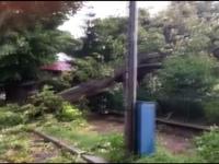 furtuni, copaci cazuti