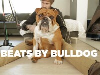 beats by bulldog