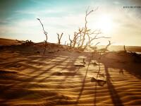 dune de nisip in desert