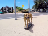 caine pe skateboard
