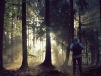 copil in padure - Shutterstock
