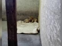 Zoo Podlogi