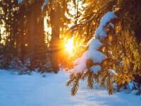 iarna - Shutterstock