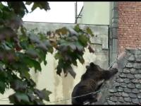 urs Sibiu