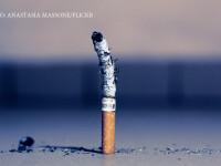 tigara cu scrum