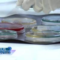 colonii de bacterii