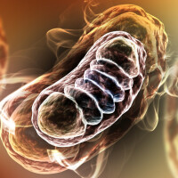 mitocondrii