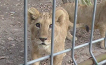 Pui Zoo