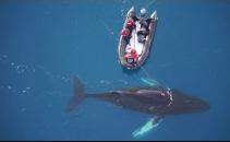 balene, camera, Antarctica