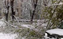 copaci cazuti chisinau