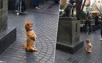 catel statuie
