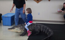 crocodil petrecere