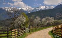 peisaj de primavara Romania