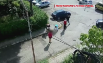 Bichon atacat de pitbull