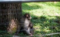 maimuza la zoo