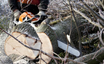 barbat care taie lemne cu drujba