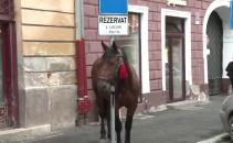 cal Sibiu