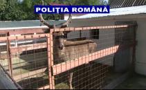 gradina zoologica ilegala