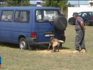 Speedy si Billy sunt primii doi caini din Romania antrenati sa gaseasca banii de contrabanda: Obligatoriu si banii au miros