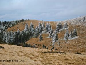 peisaj de iarna cu brazi