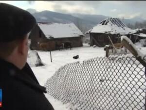 Vacile maidaneze din Lupeni au vitelusi acum si au invatat sa manance din gunoaie. De ce primaria nu face nimic